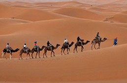 Deserts and Dunes n Morocco