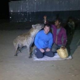 hyena feeding