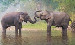 The Elephant Experience thailand