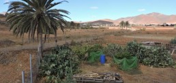 Explore the Rural area of Fuerteventura
