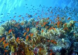 Mons Porphyrites Hurghada