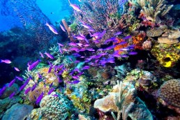 Gardens Reefs